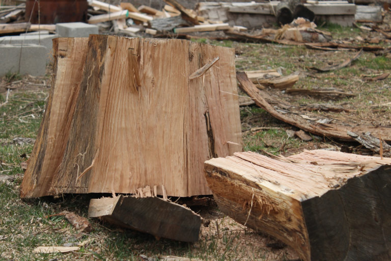 Planning to DIY your Tree Cutting and Felling?