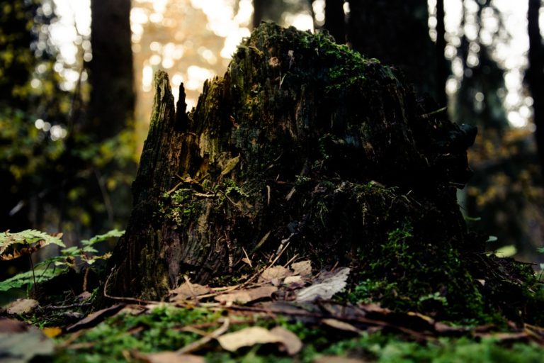 All about Stump Removal
